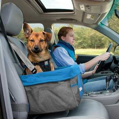 4 Tips for Driving Safely with a Small Dog