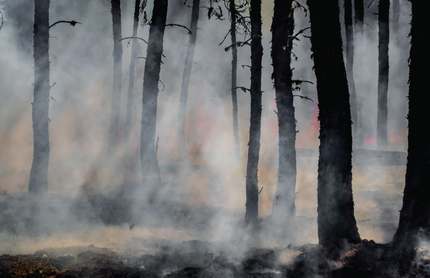 A forest fire burns in amongst trees, causing smoke