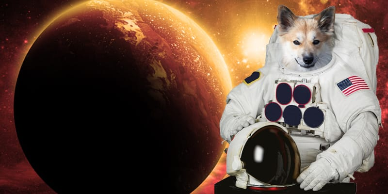 NASA: Stardog's Going to Mars!