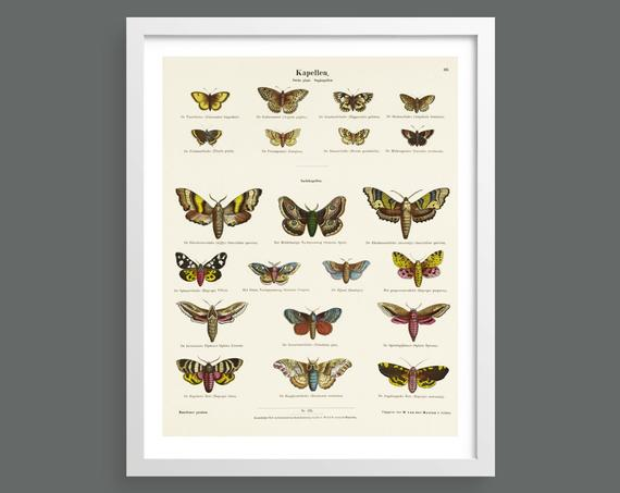 Vintage butterfly and moths chart art print