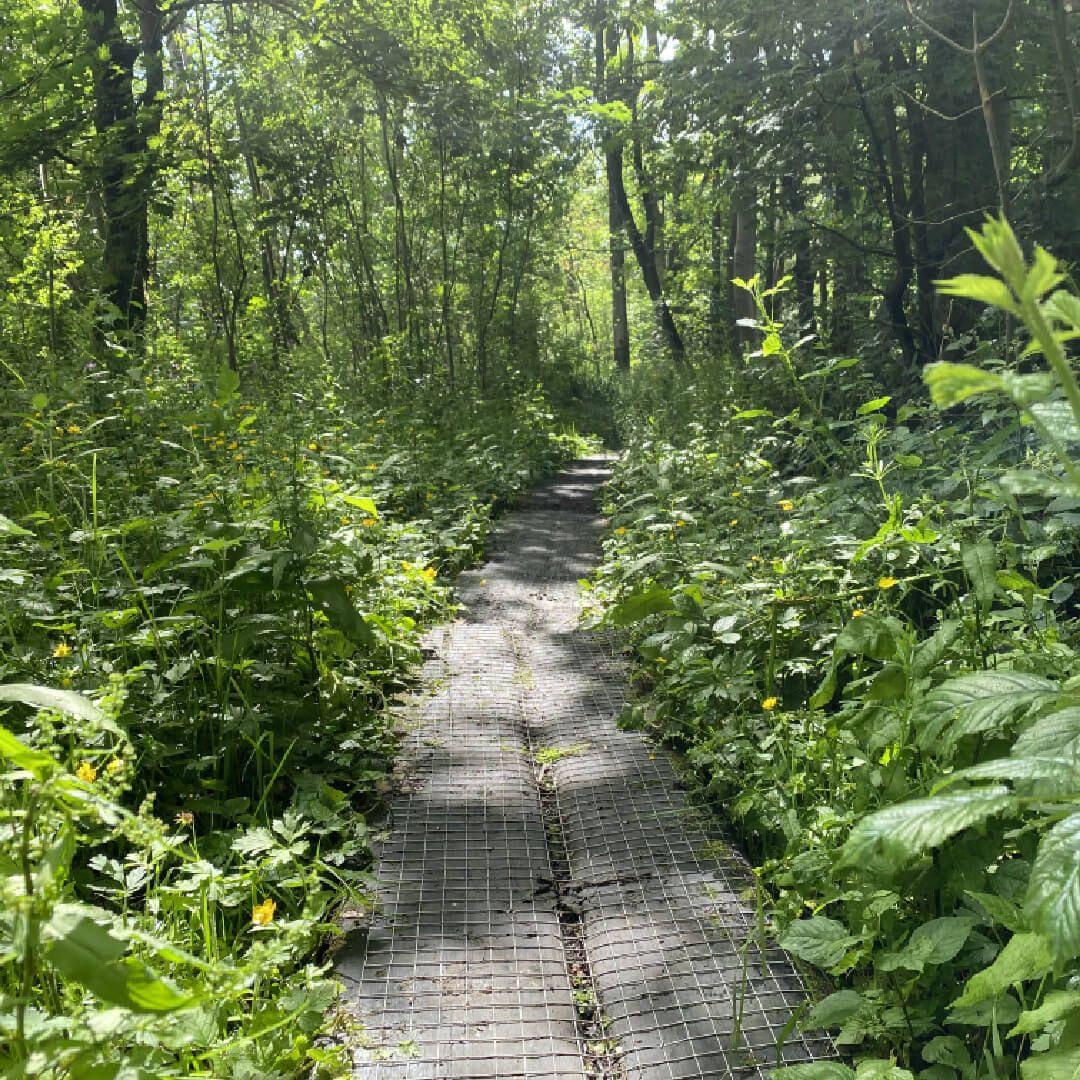 Adel Nature Reserve raised path