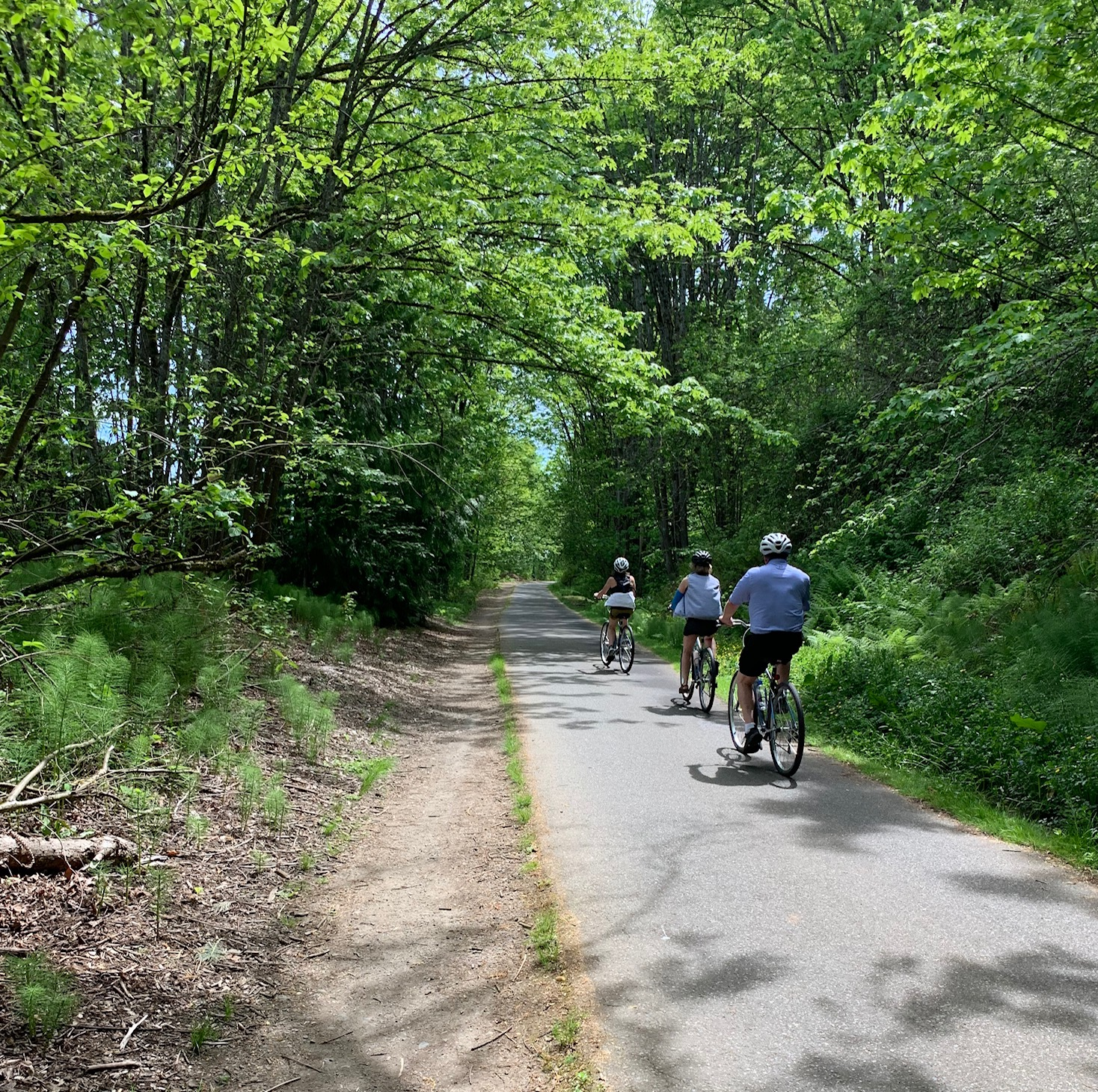 A photo of the bike tour on trail through trees.