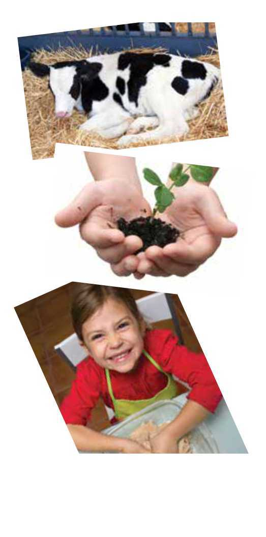 AgBio discovery camps collage of a cow, a plant, and a kid