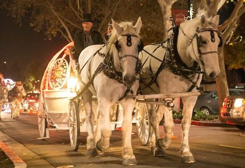 It's a Wonderful Night: horse-drawn carriage rides