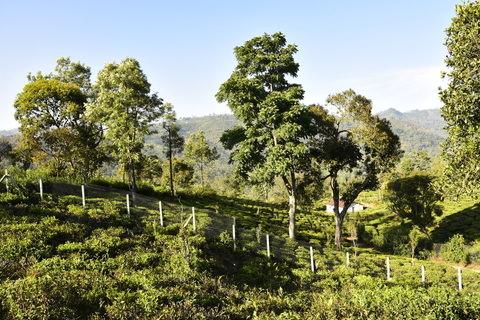 Vista Chiaro | Vitrag Group | Kotagiri, Aravenu, Coonoor