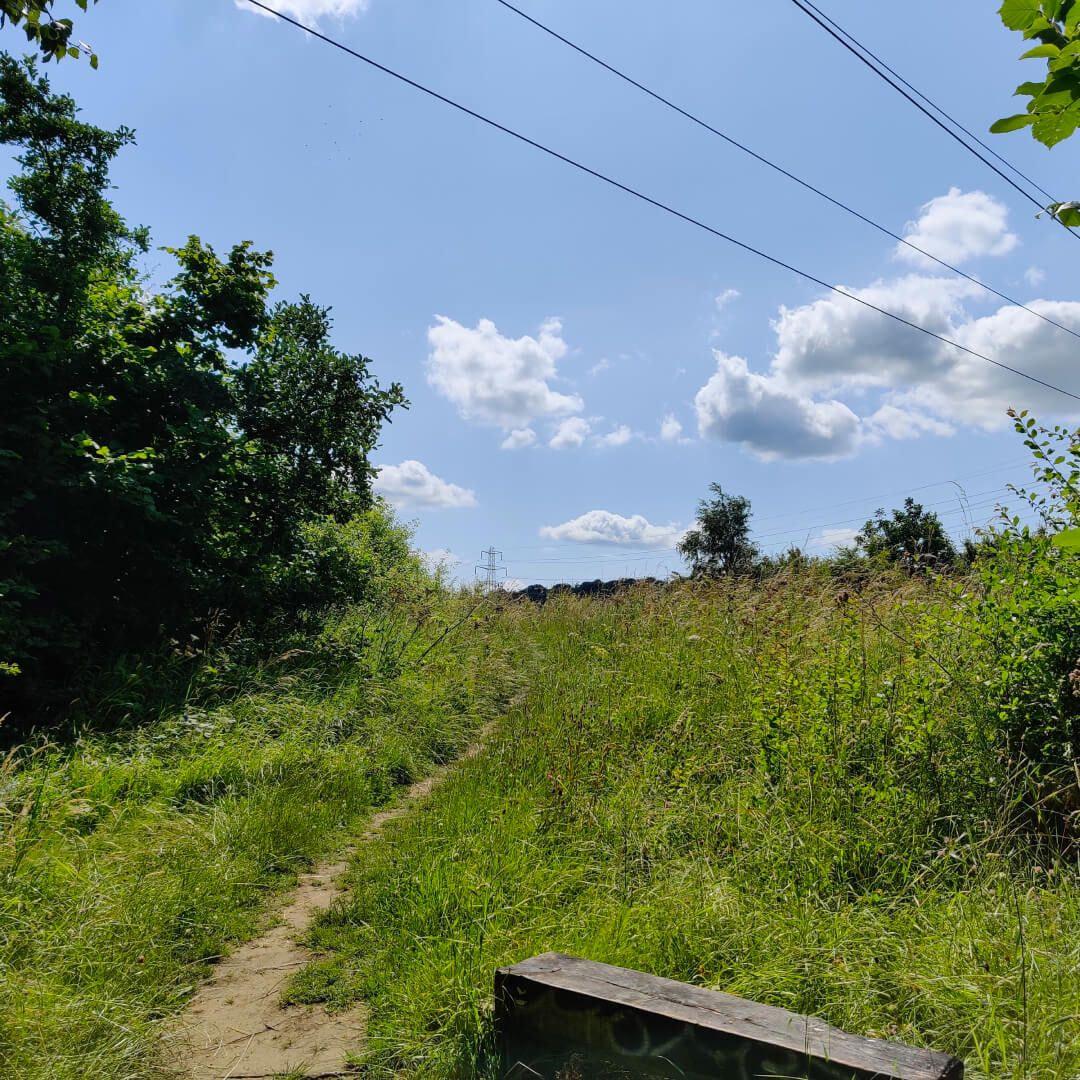 Kirkstall Valley Nature Reserve Summer Sun