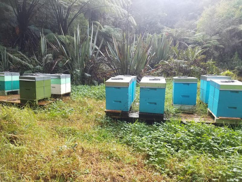 Past the bees and their boxes