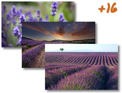 Lavender theme pack