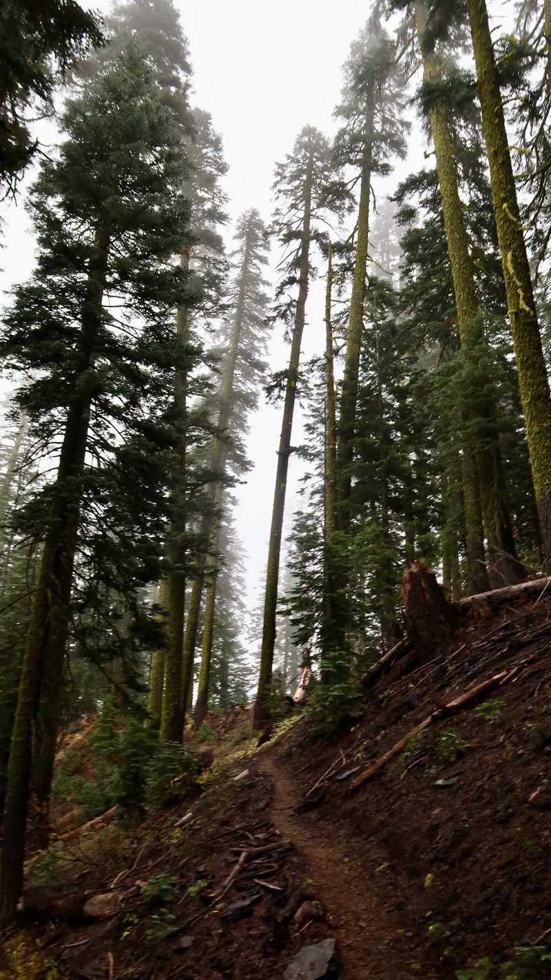 The trail climbs a shoulder of Humboldt Peak