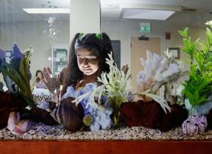 Four Basic Aquarium Care Tips for Beginners