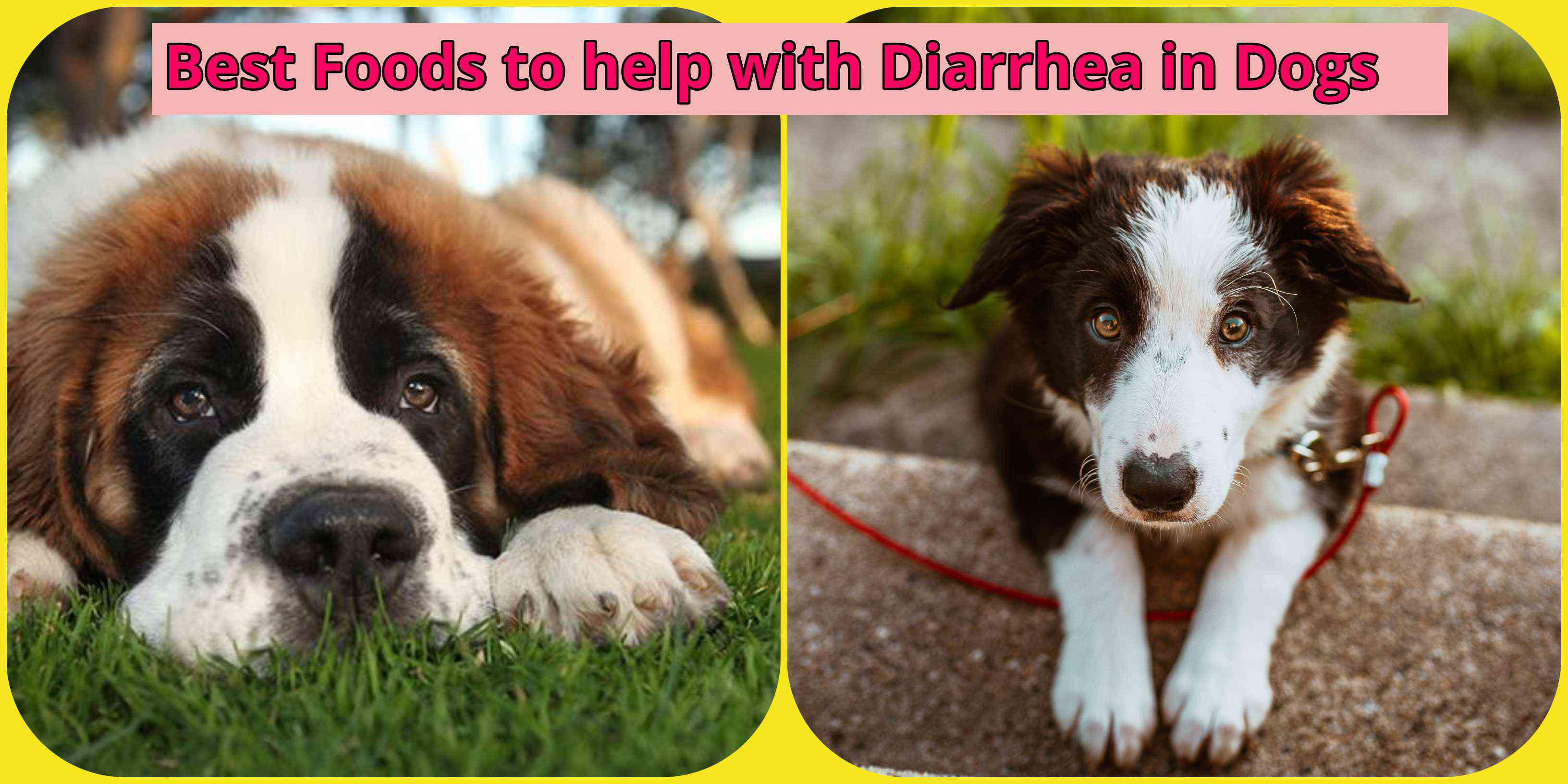 two sad dogs with diarrhea