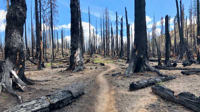 Devastation left by a wildfire