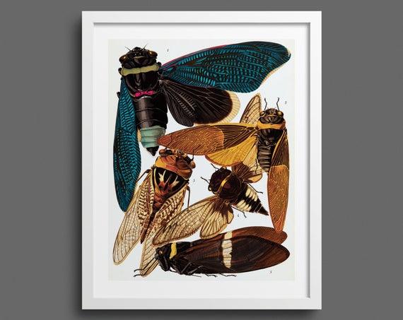 Cicadas by EA Seguy