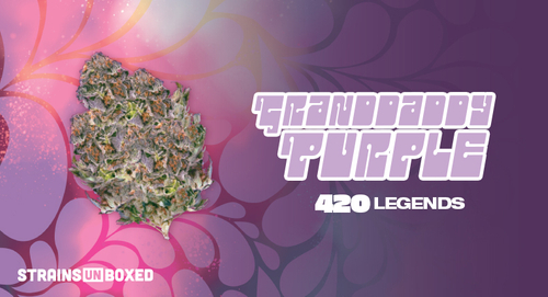 RIFF – Subway Scientist (Granddaddy Purple) Strain