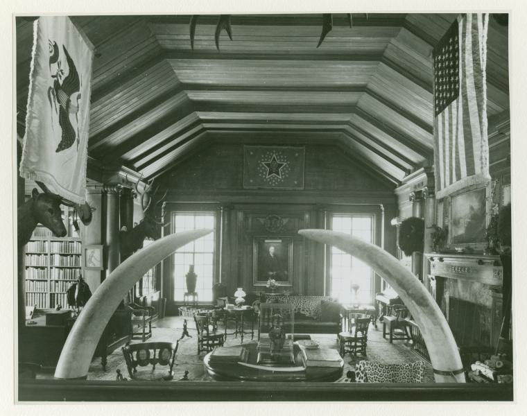 black and white photo of room filled with taxidermy