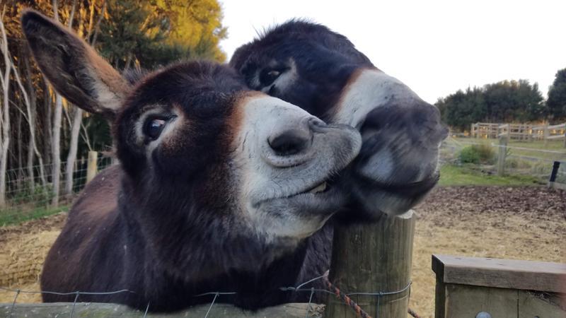 Donkey kisses