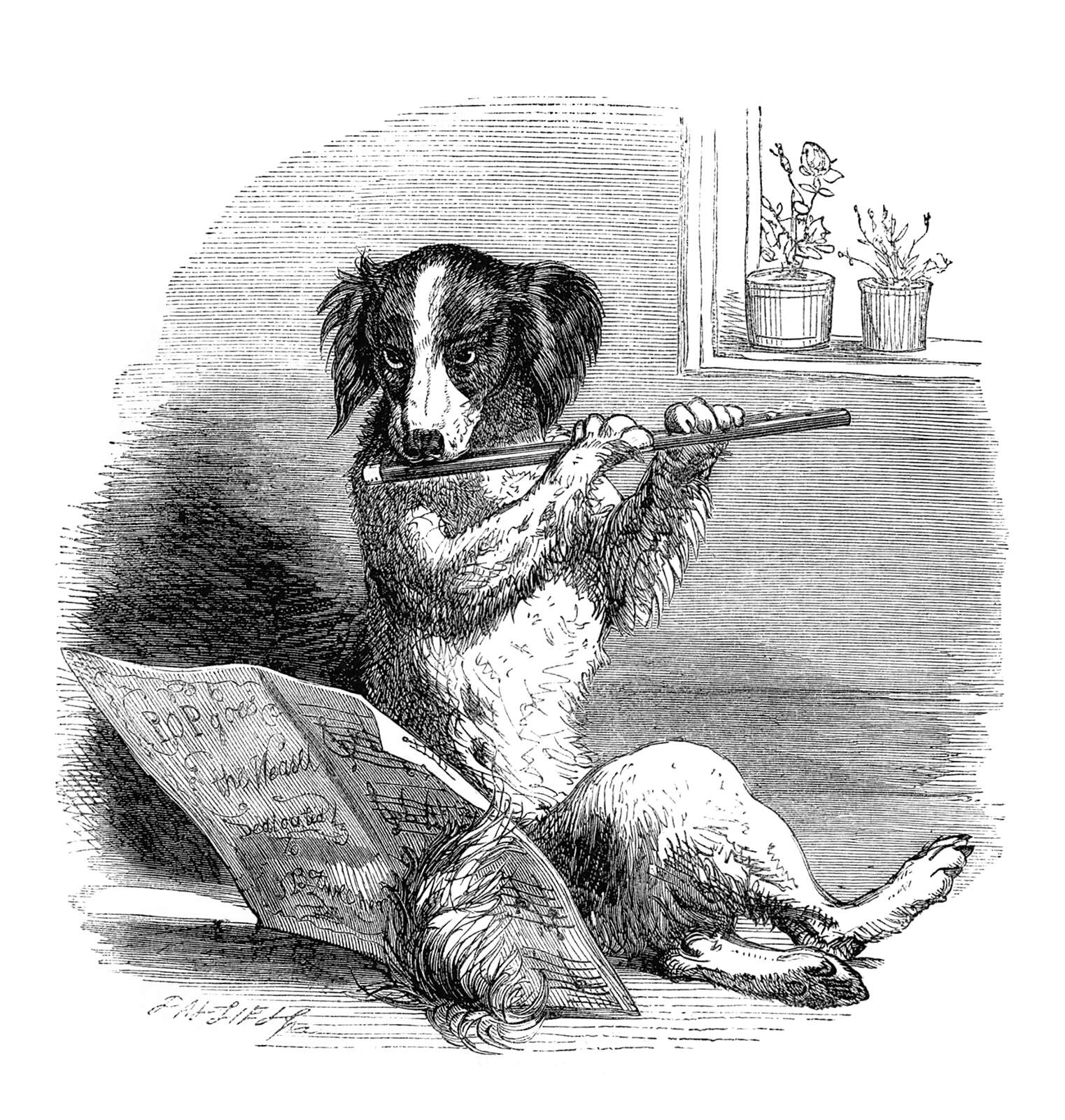 A dog plays the flute