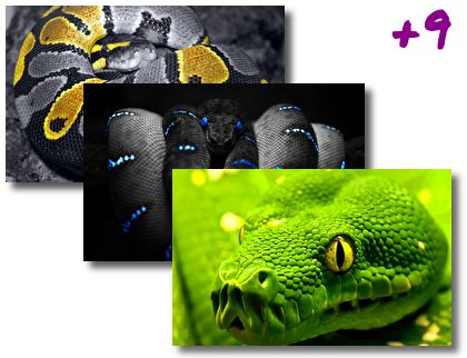 Snakes theme pack