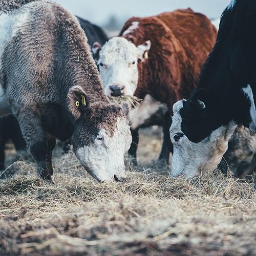 Big Ships, Blockchain, and Beef Cuts