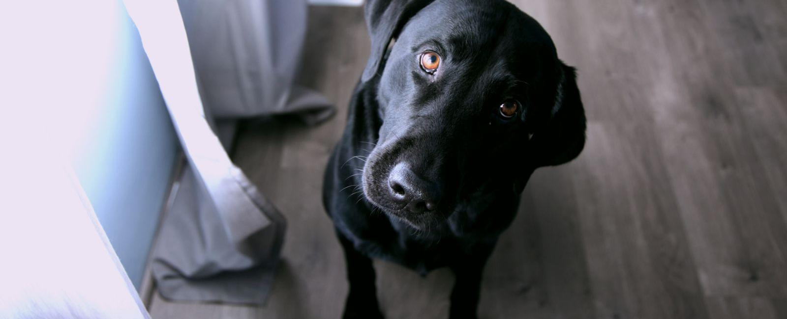 Why Your Dog Follows You Everywhere