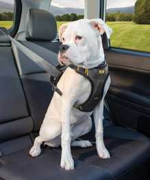 Product How To: Kurgo Impact Dog Car Harness