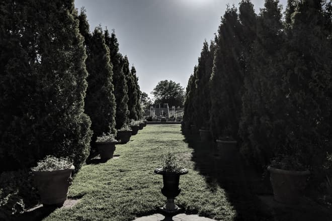 A long grassy promenade, bounded on either side by tall, thin evergreens and regularly spaced potted flowers.