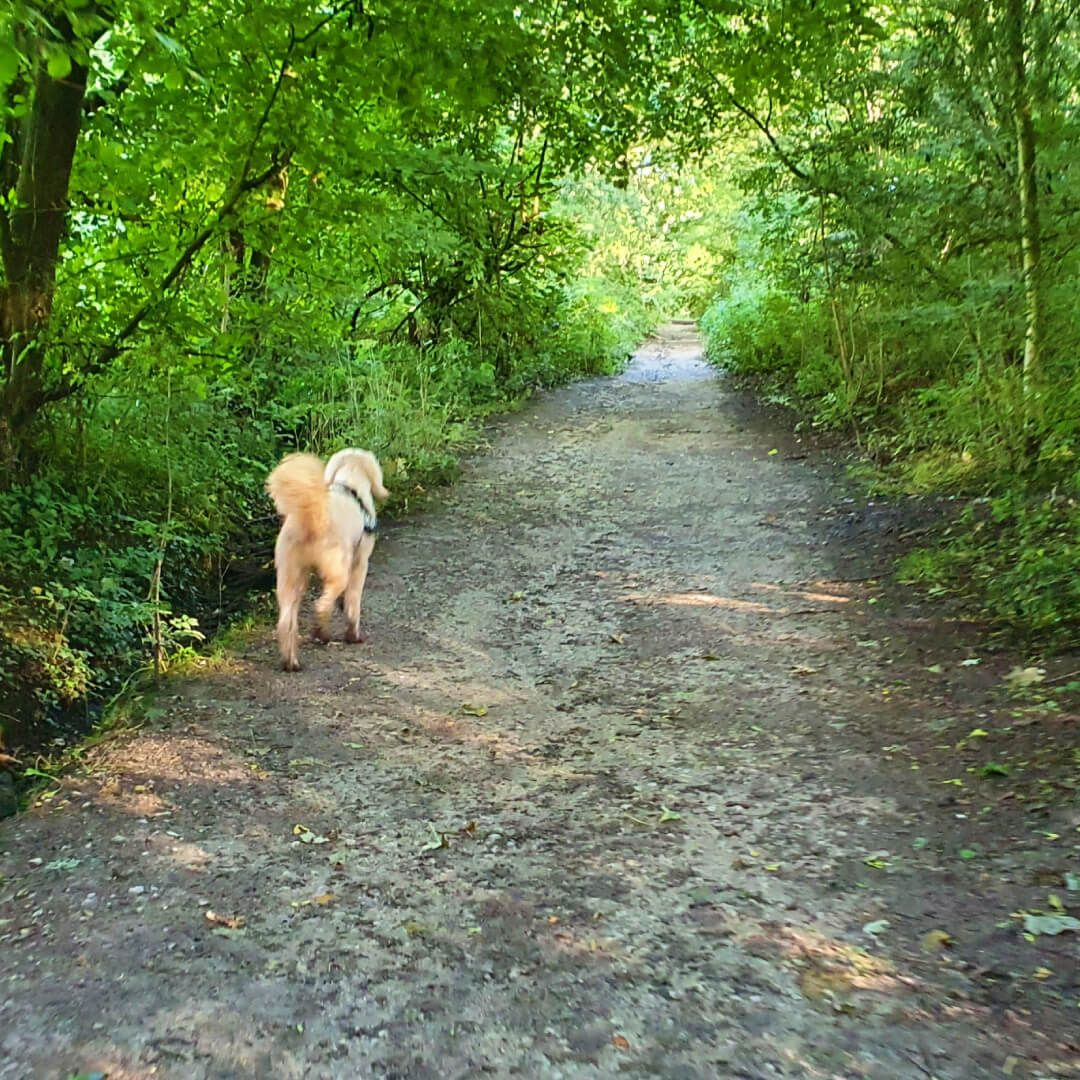 Nan Whins Wood Path with dog