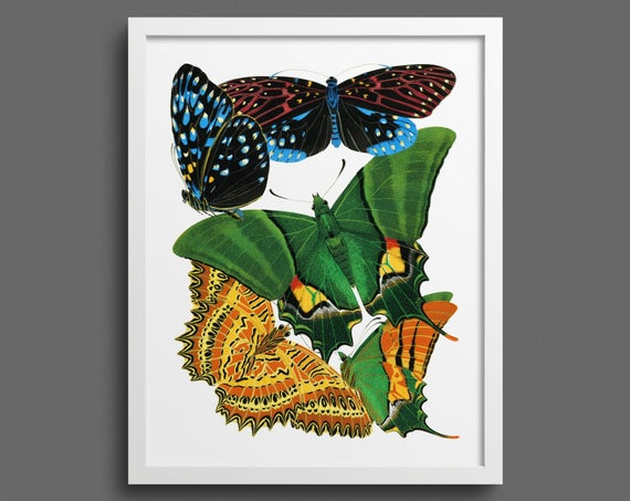Papillons by EA Seguy - plate 6