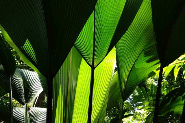 Singapore Botanic Gardens - This outstanding world of plants is a must see UNESCO World Heritage Site!