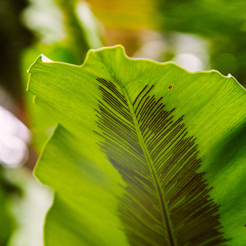Visual identity inspiration: underside of leaf with parallel lines