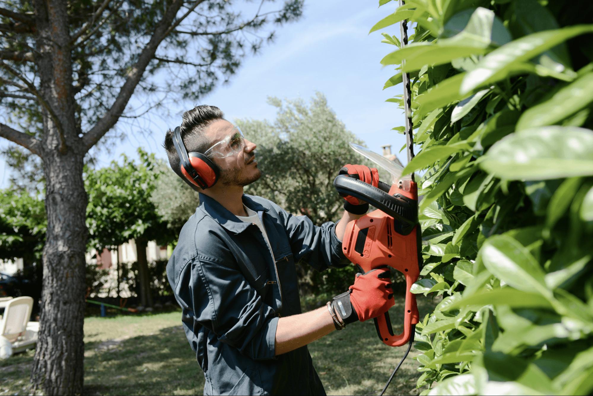 Prep bushes