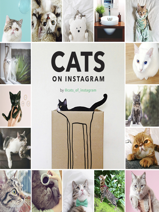 Cats on instagram image