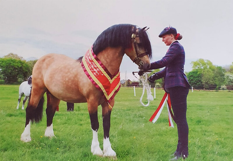 Why you should buy a Welsh Pony or Cob!