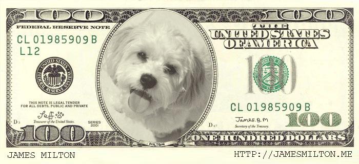 jeff the dog in a 100 dollar bill