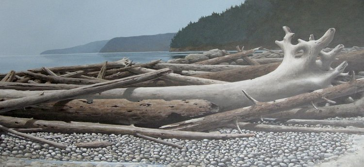 beached driftwood