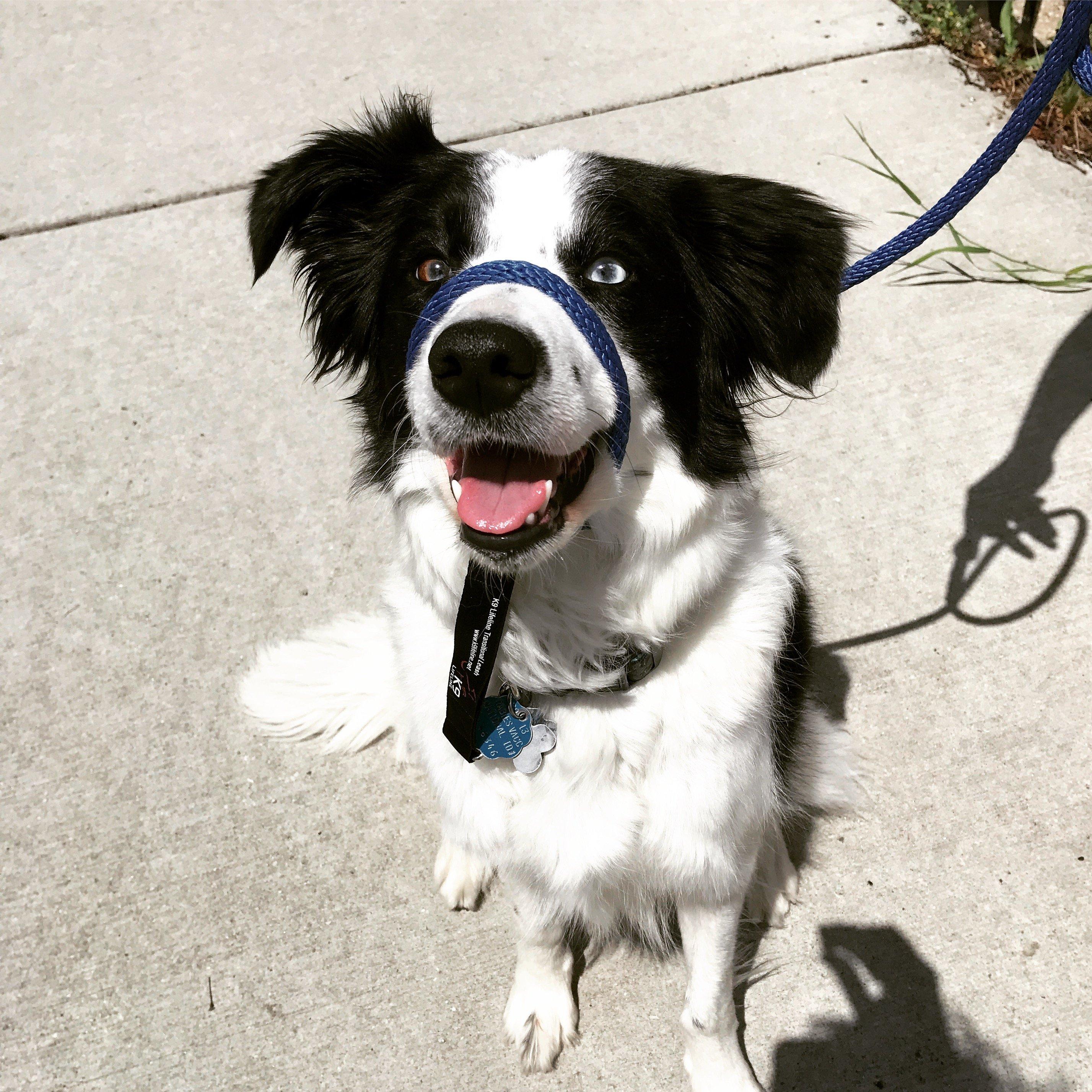 dog walk and training