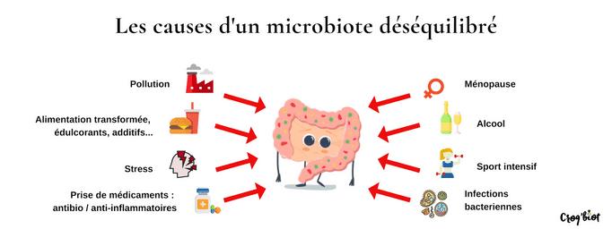 Les causes d'un microbiote déséquilibré
