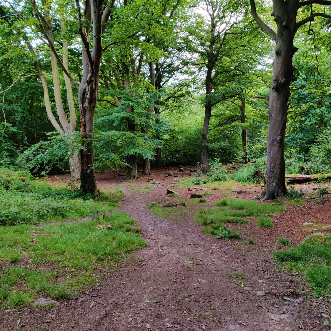 Mud path through Scotland Wood