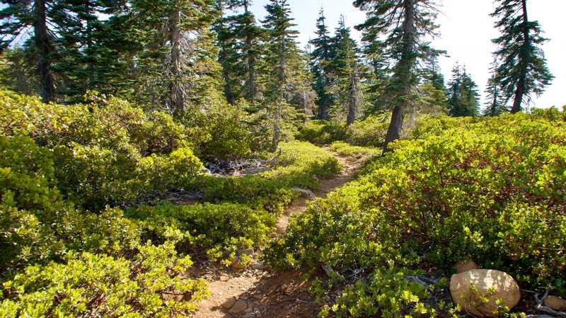 The trail crosses a high ridge