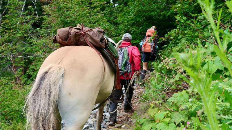 Hikers with a horse