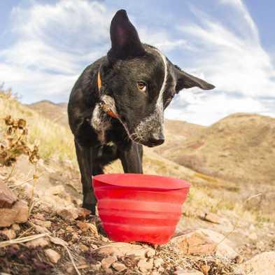 Dog Hiking Checklist