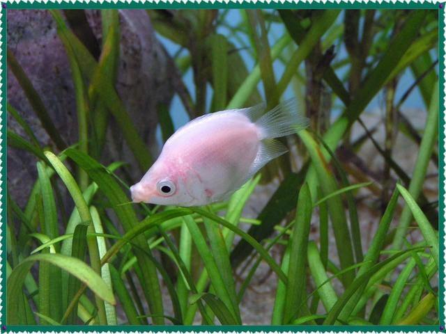 The Aquarium Disease Prevention Method