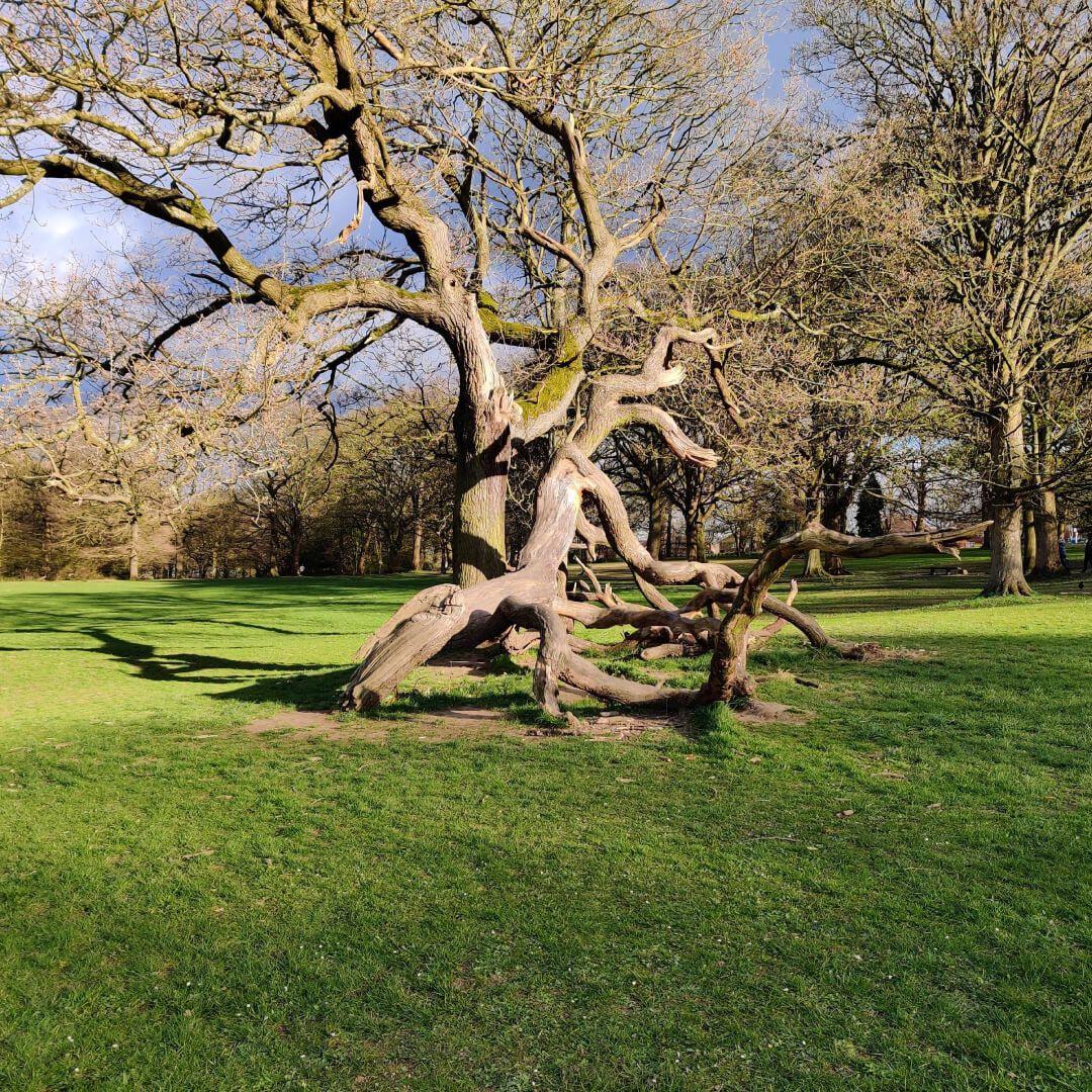 Bramley Fall Park Tree
