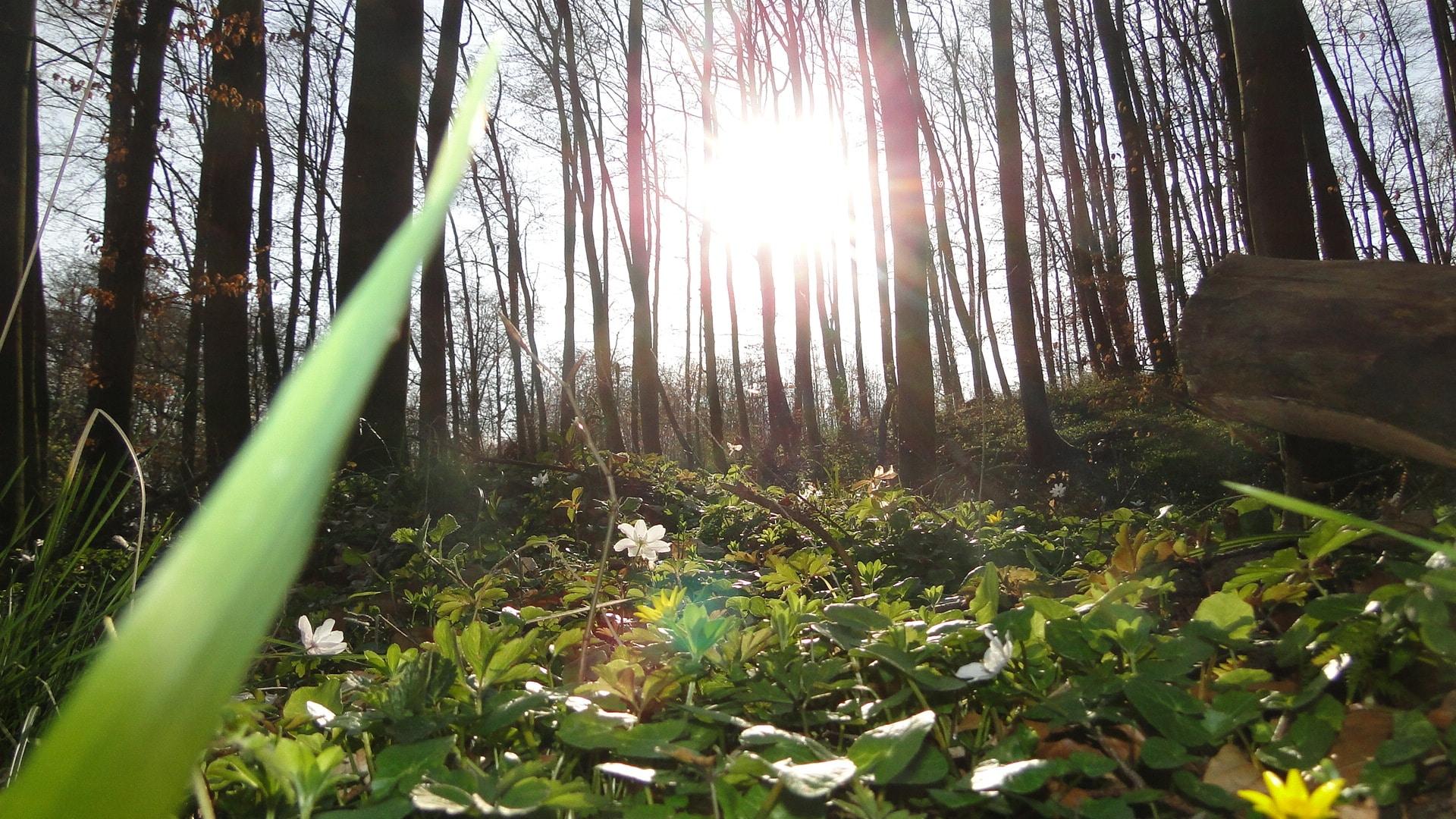 Wald mit Blumen und Sonne scheint durch die Bäume
