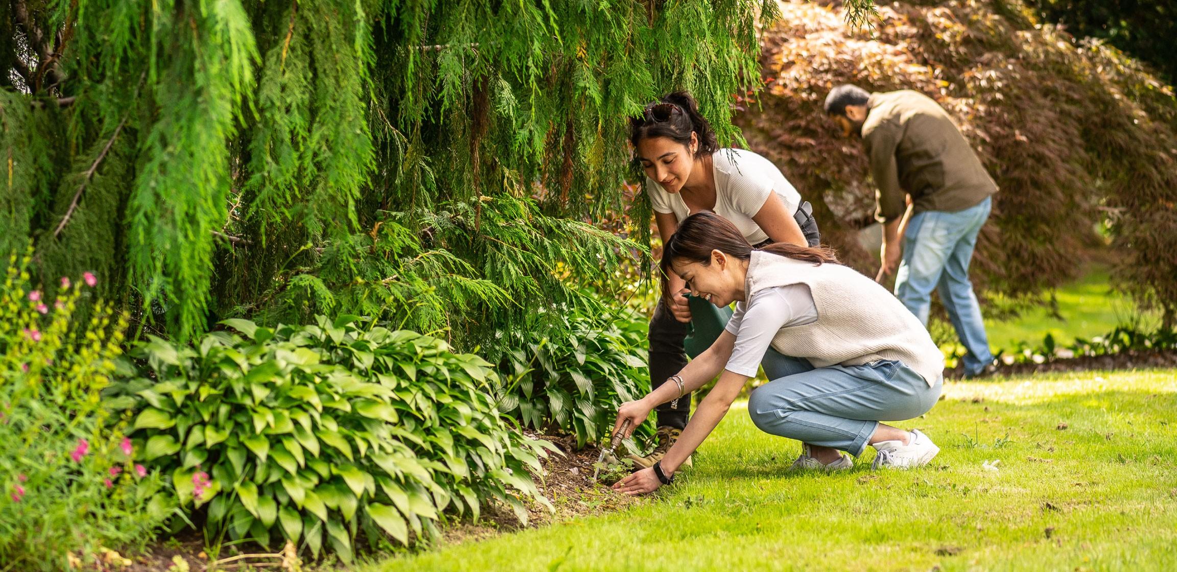 Three people tend to a community garden in their neighbourhood