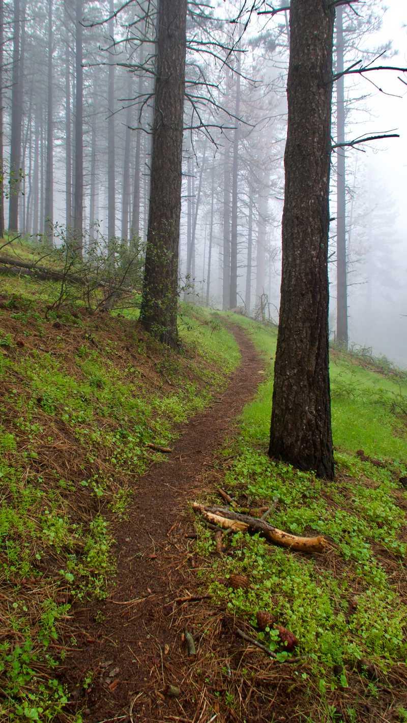 Misty trail through trees