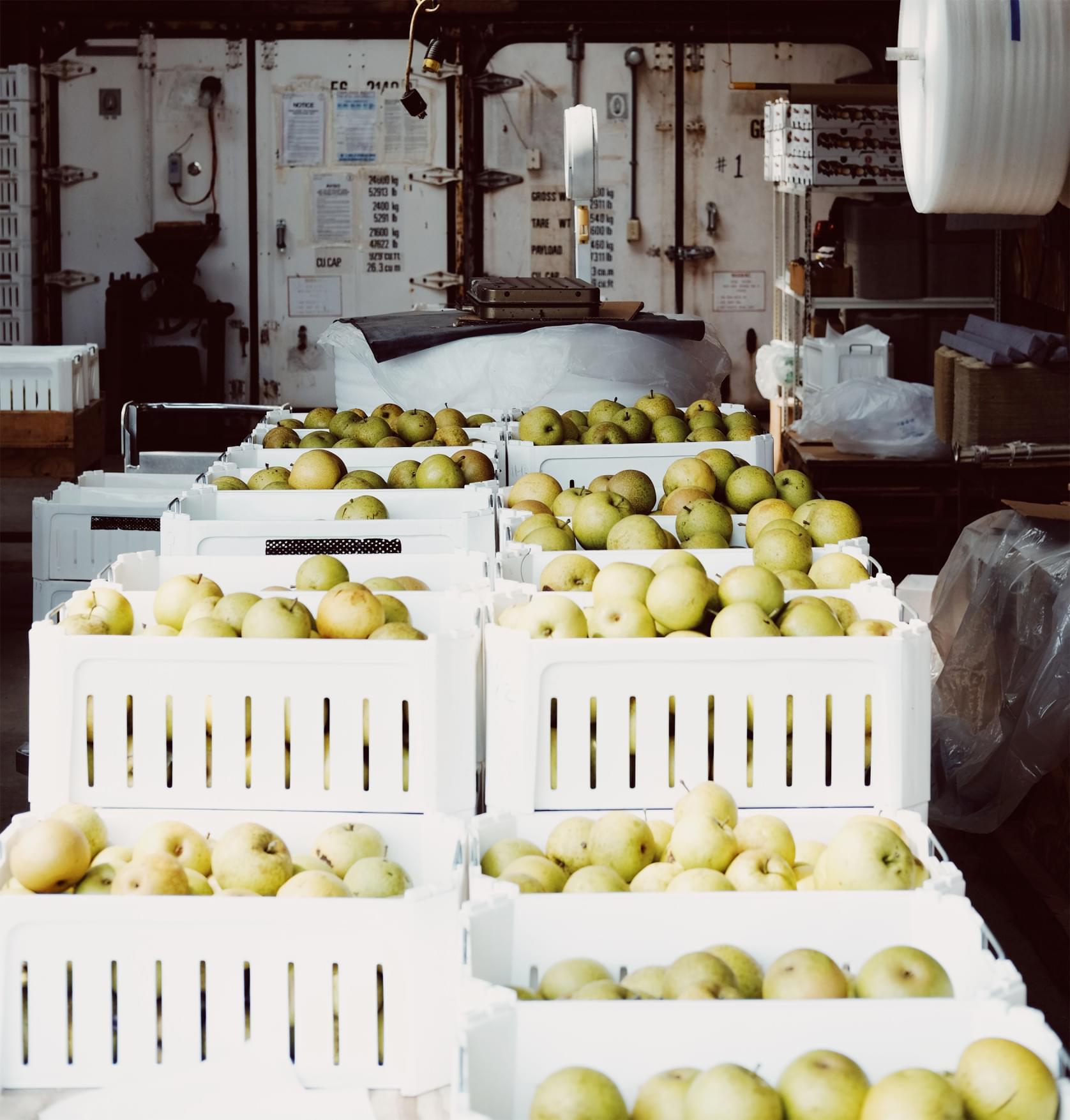 Entrepôts de pommes.