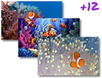 Clownfish theme pack