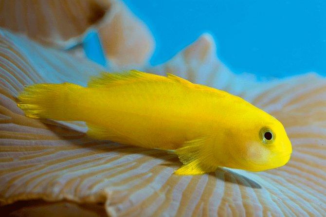coral-gobies.jpg