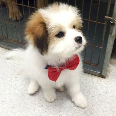 pet-dog-grooming